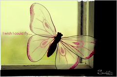 I wish I could fly (Sulafa) Tags: butterfly fly فراشة