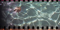 29082012-ScanFilm-Lomo-Sprocket-Rocket-Tudor-200-isos-032 (Fredographie) Tags: film analog lomo lomography ishootfilm 200iso analogue argentique lomographie sprocketrocket scanprint tudorcolor