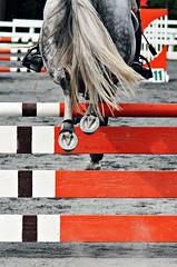 over the orange fence (Jen MacNeill) Tags: horses horse english animal canon jump jumping pennsylvania riding jumper horseshoe horseshow pe hoof equestrian quentin equine hooves fallshow gypsymarestudios jennifermacneilltraylor jmacneilltraylor
