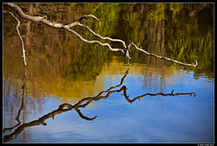Water Shine (Geoff Trotter) Tags: newzealand color colour art nature water canon pond nz 50d geofftrotter stunningphotogpin
