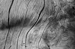 Natural Carving (Michele Ginammi) Tags: wood lebanon abstract carving cedar astratto libano legno scultura cedro
