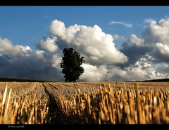 Autumn is near (bernd obervossbeck) Tags: cloud tree nature field clouds landscape natur feld wolken landschaft baum kornfeld sauerland latesummer stubblefield landscapephotography sptsommer stoppelfeld landschaftsfotografie mygearandme