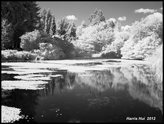 Infrared Pond - Van Dusen Garden X1142e (Harris Hui (in search of light)) Tags: light summer sky bw canada reflection water monochrome vancouver clouds garden ir mono blackwhite pond fuji bc richmond infrared fujifilm sunnyday vandusen sunnyafternoon r72 vandusengarden hoyar72 heronlake digitalcompact invisiblelight infraredbw summerisalmostgone plentyoflight harrishui vancouverdslrshooter summer2012 fujix10 thelightyoucannotsee