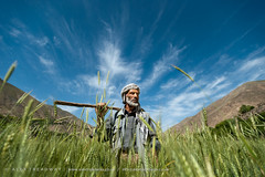 A proud farmer surveys his wheat fields (Alex Treadway) Tags: people food afghanistan man green nature field grass proud standing work bread outdoors photography holding asia serious cut wheat farming grain working harvest grow culture straw content bluesky fresh hills valley crop cutting land fields labour environment strong among produce growing farmer copyspace shovel agriculture yield himalaya striking eastern stern hardwork naturalworld himalayas collecting oneperson owner noble frontview spade ownership harvesting satisfied gather dignified steely cultivate realpeople colorimage ruralscene onemanonly panjshir freshlycut panjshirvalley