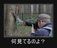 何見てるのよ? #動物 #カメラマン #写真 (Demochi.Net) Tags: life cute sexy japan fun japanese motivator culture 日本 ペット 猫 demotivator 金 家族 結婚 ゲイ 女 子供 おっぱい 愛犬 政治 社会 巨乳 文化 眼鏡 教育 demotivators 経済 女性 初恋 r18 女子 カップル 子猫 女装 お笑い motivators 会社 少子化 企業 ユーモア 恋 悪い 格差 風刺 一言 デモチ 大喜利