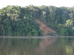 Viajando pelos rios Tapajos e Cururu, da aldeia Sai Cinza ate a aldeia Carocal        DSC06876 (Wilmar Santin) Tags: brazil brasil brasilien paisagem pa par brasile tapajs ribeirinha riotapajs paisagemamaznica paisagemribeirinha paisagemribeirinhaamaznica