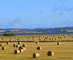 Harvest at Loch Leven (B4bees) Tags: blue green water yellow golden scotland farm farming harvest straw hills fields agriculture bales subjects kinross lochleven lochlake