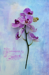 Orchid (cas lad) Tags: orchid flower textured photographieartistique caslad frenchkisscollections