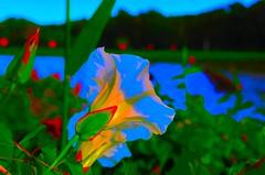 DSC_5480 Kleur