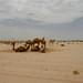 Companheiros de deserto