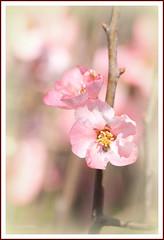 blossom botanical-gardens (loobyloo55) Tags: flower flora blossom sydney australia nsw botanicalgardens floraandfauna alilttlebeauty