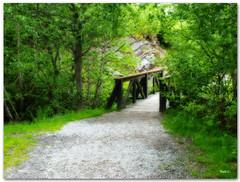 Camino al puente (Nati C.) Tags: naturaleza puente camino paisaje catalunya pirineos lleida efectoorton valldarn