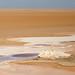 Tunisia-3901 - Chott el Jerid