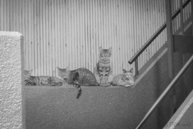 Today's Cat@2012-09-28