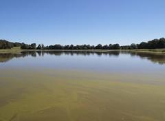 algues cyanobacteria sur un étang - blue-green algae on a pond (dombes et ailleurs) Tags: etang cyanobacteria algue bluegreenalgae dombes