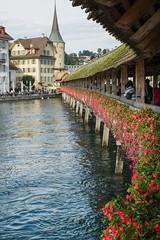 Kapellbrcke (Bephep2010) Tags: bridge flower river schweiz switzerland wooden sony luzern alpha blume brcke fluss lucerne 77 chapelbridge kapellbrcke reuss holzbrcke slta77v sal1650f28