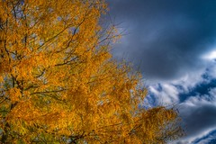 Autumn in Berlin (Lens Daemmi) Tags: blue autumn sky berlin leaves yellow germany herbst himmel gelb blau bltter