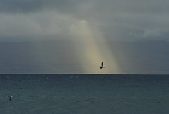 Breaking light (GeirB,) Tags: autumn light sea seagulls seascape norway landscape geotagged norge nikon norwegen arctic noruega gps nikkor lys d3 nordnorge finnmark hst vads landskap gp1 varanger vadsoe vadso barentsregionen