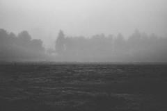 #332 of 365 days - fog day (Ruadh Sionnach) Tags: nature natur natureza natural folk cozy landscape fog rvores bosque floresta valley hills campo field fields pine pines grass obscure pagan paganismo paganism druidism dark darkness neblina