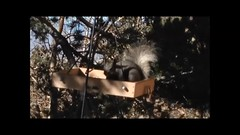 Squirrel movie (cresthouse) Tags: sandia crest house new mexico 2 two miles high