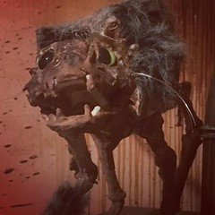 Pretty kitty #Frightland #Horror #Delaware #HauntedAttraction (frightland) Tags: frightland haunted attractions delaware house scariest philadelphia maryland new jersey pennsylvania horror