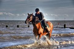 Having a splashing time (Steve.T.) Tags: horse horseandrider sea surf splash splashing horseinthesea exercise ridingahorse essex frintononsea frinton ocean northsea eastcoast coast seaside beach seafront nikon d7200 sigma18200 waves exercisingahorse riding
