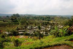 IMG_0613 (Marta Montull) Tags: holidays indonesia canon gopro malaysia kuala lumpur bali gili islands rice terraces temples monkey travel photography landscape