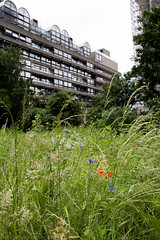 Fann Street Garden-6 (Out To The Streets) Tags: 20160619 barbican barbicancentre fannstreetgarden london opengardens opengardens2016 architecture blue building cornflowers grass green poppies red wildflowers