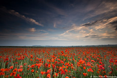 (Claire Hutton) Tags: witchampton dorset uk poppies poppy red field remembrance flower flowers plant sunset clouds sky colour colourful rural horizon leefilters ndgrad sonya6000