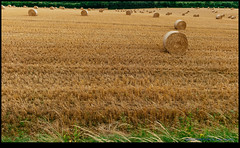 160713-9663-XM1.jpg (hopeless128) Tags: france eurotrip 2016 strawbales field bioussac aquitainelimousinpoitoucharen aquitainelimousinpoitoucharentes fr