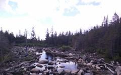 011 - Parc national de la Gaspsie : Lac aux Amricains (Arfphandal Forfal Forphan) Tags: trip qubec gaspsie forest tree arbre fort nature water eau park landscape
