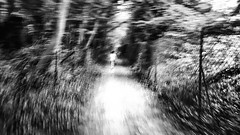 Step of life : Lost my Innocence The more I move forward in the life and the more I lose my innocence, goes you it remain me there for my last days?  #art #fuir #fuirlavie #evasion #monochrome #foret #forest #chemin #way #galaxys6 #samsung #enfance #innoc (ATH Nol) Tags: monochrome evasion perdu chemin voie enfance foret forest galaxys6 walking way promenade samsung lost art innocence fuir fuirlavie