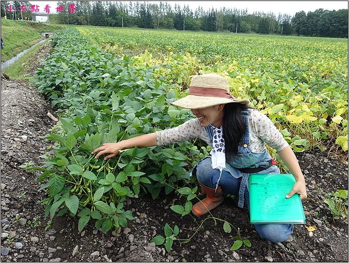 川野農場 DIY採玉米 (5).JPG