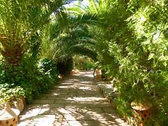 Eingang zum Paradies (a.pri48) Tags: palmen grn mallorca