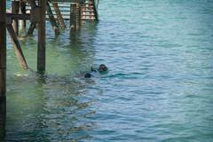 Buceando (Bichuas (E. Carton)) Tags: buceando gente escaleras estructura nautico nautical mar sea ciudad city donostia sansebastian safecreative