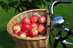 An apple a day... (Blue sky and countryside.) Tags: discovery apples orchard derbyshire sunshine homecooking england pentax raleighsuperbe cycle