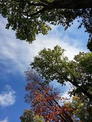 2016-09-22_10-49-26 (presteza777) Tags: tree outdoor green park   autumn pushkin sky