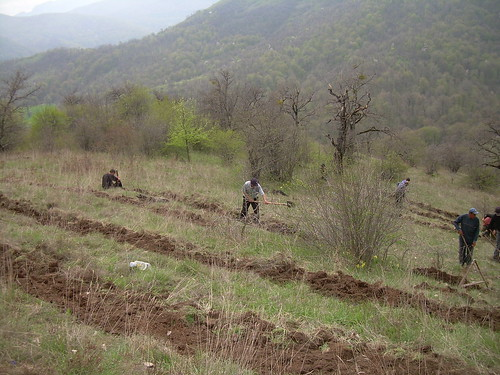 Goris reforestation site