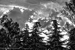 The Storms of Late Summer (OutlawMenacePhotography) Tags: california trees light bw sun white black rain weather clouds high afternoon dynamic lightning storms range thunder redlands hdr yucaipa oakglen