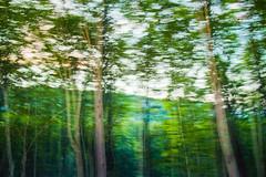 Somewhere far away ... (LaPanteraRosa.) Tags: longexposure tree forest hungary flashlight bükk magyarország sigma1770 sonyalpha700 mogyoróska lillafüredfelé