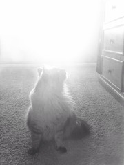 The Light (Jenn (ovaunda)) Tags: utah enoch iphone jennovaunda ovaunda iphone3gs instagram