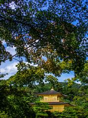 PhoTones Works #1956 (TAKUMA KIMURA) Tags: photones omd em5 japan plant world heritage nature landscape scenery kyoto kinkakuji 金閣寺 京都 風景 景色 自然 世界遺産 日本 植物 takuma kimura 木村 琢磨 木村琢磨