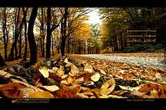 Fall (ahmad khatiri) Tags: photo iran ahmad gorgan khatiri  golestan