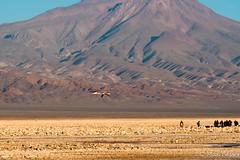 Chaxa-47.jpg (Max Besser Jirkal) Tags: chile flamencos sanpedrodeatacama iiregin lagunachaxa salaratacama reservanacionallosflamencos