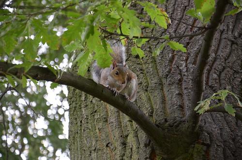 Big squirrel is watching you! ©  Still ePsiLoN