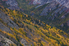 Mountain Colors (Joe Ganster) Tags: park autumn mountain mountains fall nature colors rock alaska landscape us rocks ak joe september national healy geology aspen denali spruce quaking ganster usnp
