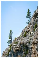 I Due Solitari (Paolo Avezzano) Tags: wood italy mountain alps tree minimal trent trento albero alpi montagna minimalist trentino dolomites dolomiti legno trient minimalista 70200mmf28 trentinoaltoadige tesero nikond300 paoloavezzano trentinsüdtirol trènt