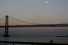 bay gull (Bogart Cat) Tags: sanfrancisco bridge usa mist america oakland james bay francisco baybridge  oaklandbaybridge rolph sunnyjim sanfranciscosan bridgethe baybridgesanfranciscobaybridgesanfranciscousa behindtheferrybuildingattheembarcaderosanfranciscoca94105 goldengatebridgesanfranciscofog