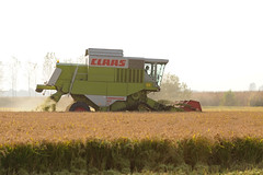 Claas (ste.it) Tags: countryside rice harvest campagna riso campi risaia claas risaie contry raccolta mietitura raccolto mietitrebbia maturo mietere trebbiare mietitrebbiatrice