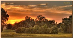 Sonnenuntergang Rheinwiese (fragud) Tags: morning light sunset summer panorama cloud sun nature clouds sunrise river germany landscape deutschland fire gold abend licht leaf weide sonnenuntergang sundown sommer laub feld wiese storage dmmerung feuer landschaft sonne rhein sonnenaufgang morgen baum hdr monheim gegenlicht d800 gemtlich freiheit glck kirchturm feldrand hitdorf clouts naturfotografie nikond800 100commentgroup krancafe mygearandme mygearandmepremium mygearandmebronze mygearandmesilver blinkagain fragud